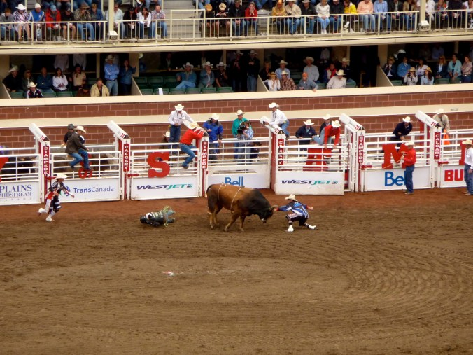 Bull gets the better of a Cowboy at the Stampede.