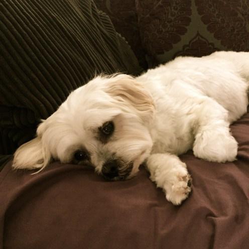 Sleeping it off.