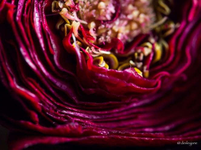 Inside the rose.
