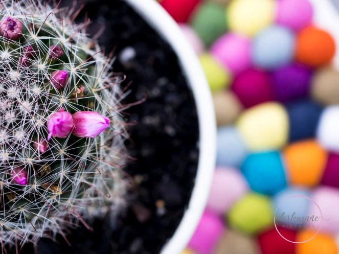 succulentpinkflower-17