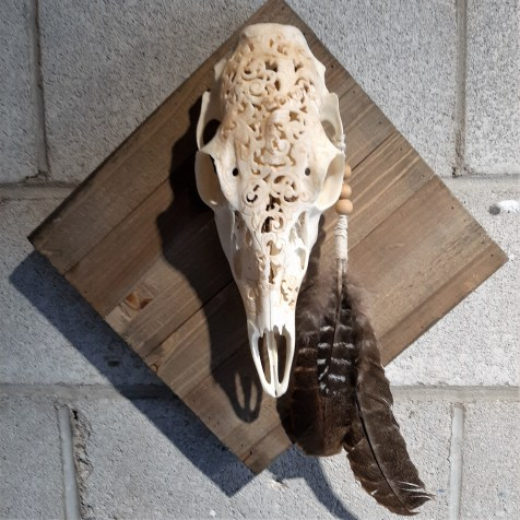 Small Doe Skull by Jennette Conners