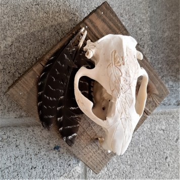 Small Beaver Skull by Jennette Conners