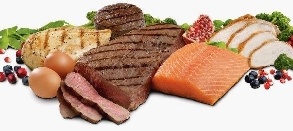 Protein nutrition - muskultura.mk