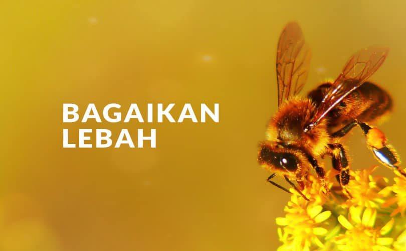 Seorang Mukmin Bagaikan Lebah