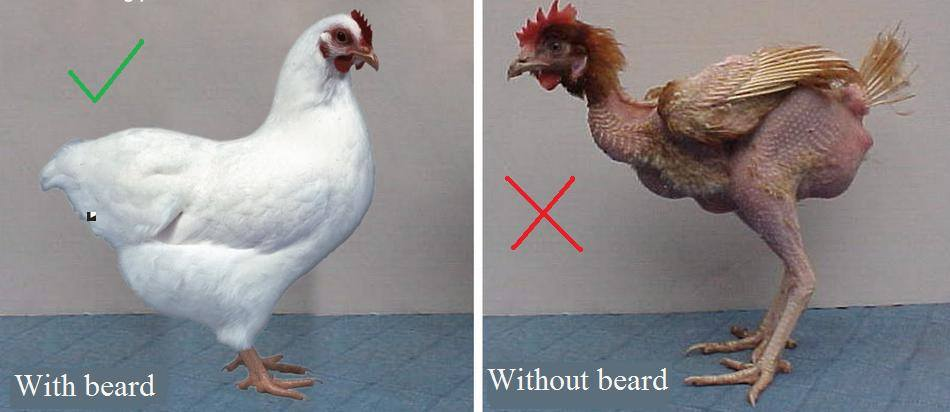 """Please brothers! BEARDS show you are healthy, just like FEATHERS show birds are healthy."""