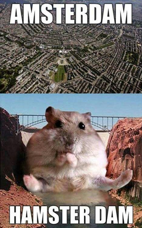 Hamster MM