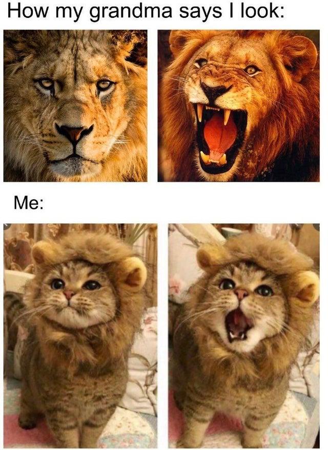 Lion MM