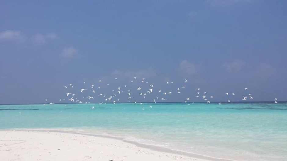 Beautiful Maldivian blue waters, private island