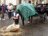 święteczny florencki koń