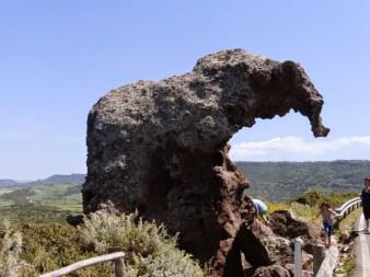 39. Słoń niedaleko Castelsardo
