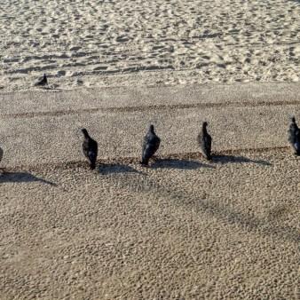 46. Tel Aviv - gołębie w szeregu