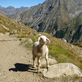 26-zagubiona-owieczka