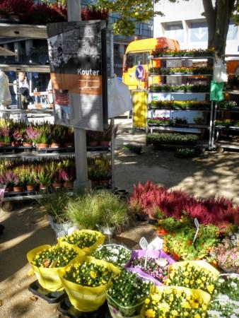 targ-kwiatowy