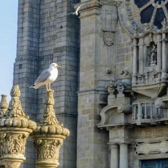 4. Katedra Se do Porto z mewą
