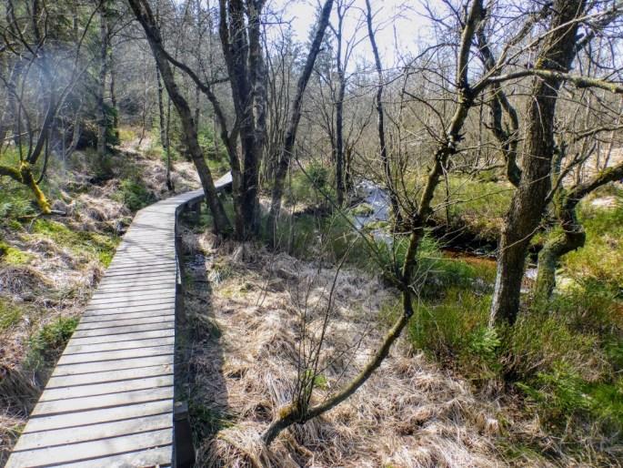 mostek-w-lesie