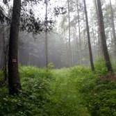 Miły, zielony las. Gdyby jeszcze nie lało nam na głowy...