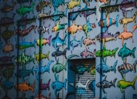 Iconic Wellington Shark wall