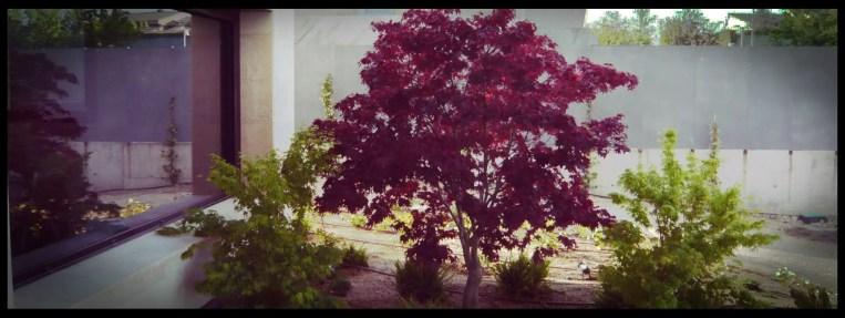 plantación jardín aravaca