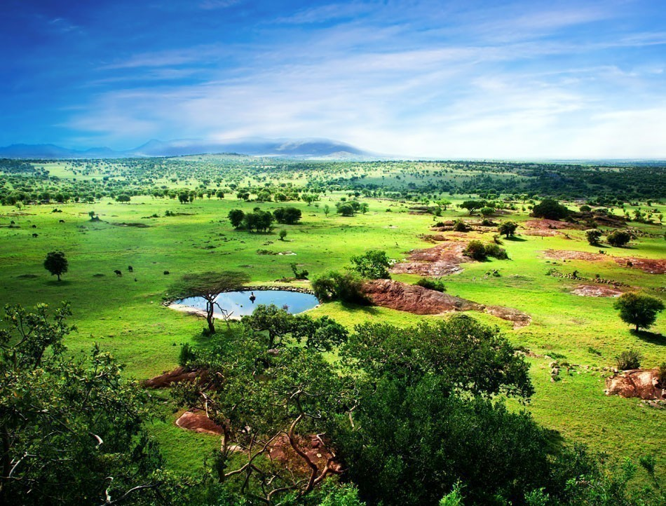 Savanna in bloom, in Tanzania, Africa panorama. Serengeti National Park | 10 Things Not to Miss in Tanzania