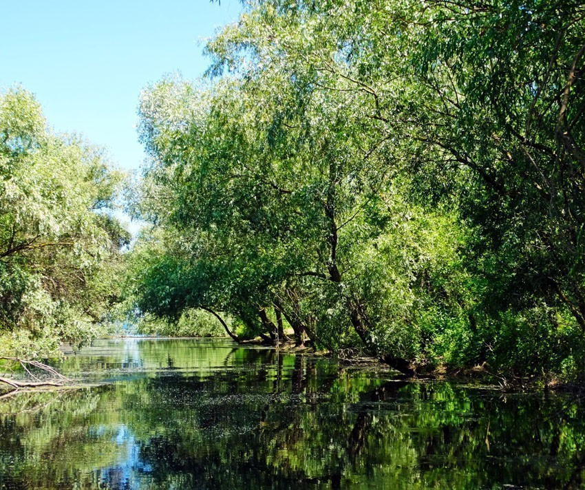 A typical landscape in Danube Delta | 5 Reasons Why Romania is the Country Every Traveler Needs to Visit