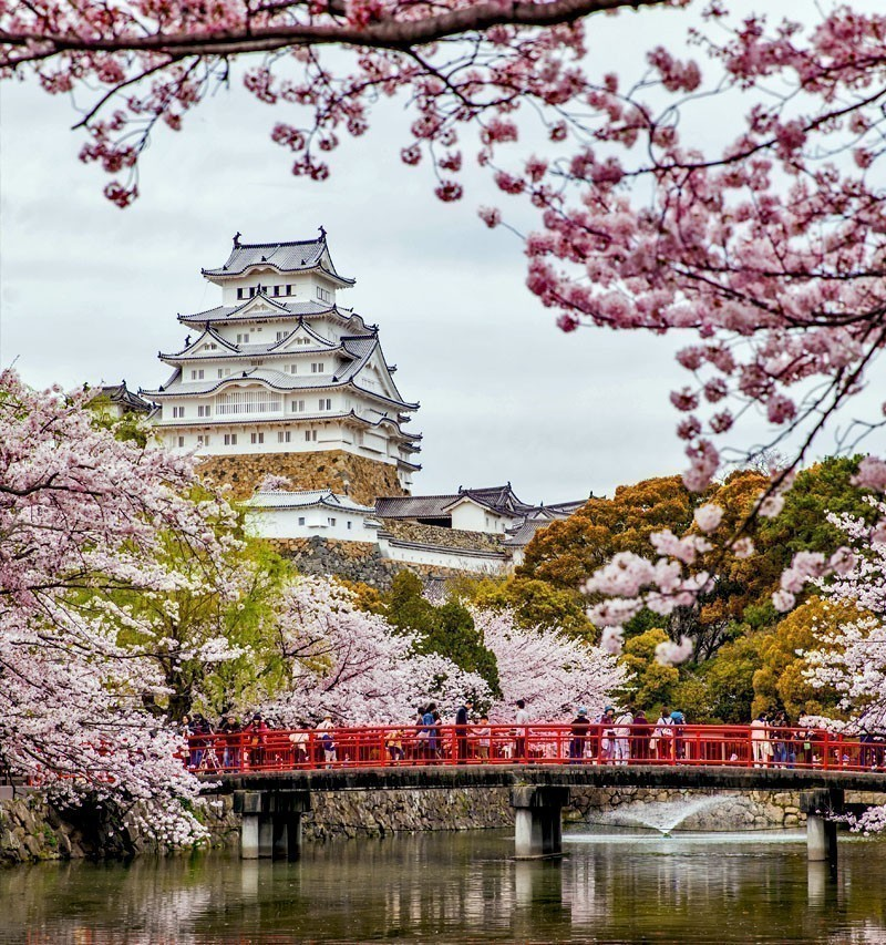 Japan Himeji castle, White Heron Castle in beautiful sakura cherry blossom season | TOP 10 Tourist Attractions in Japan You Must Visit