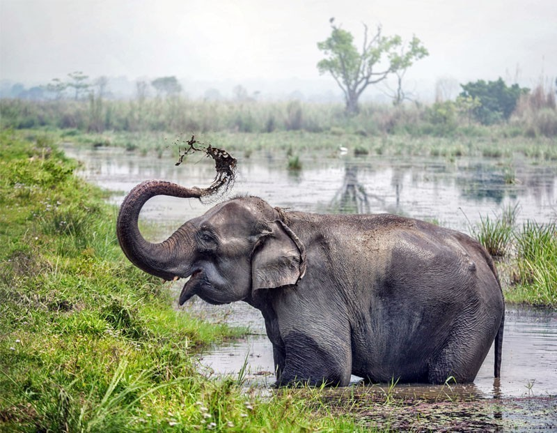 Elephant taking a bath in the river of Chitwan National Park | 10 Top-Rated Tourist Attractions in Nepal