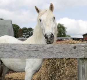 A horse named Jazz with a hay bale