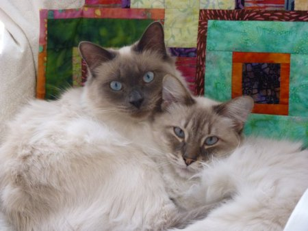 Jonas and Cooper on quilt