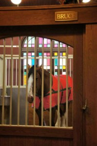Bruce the Budweiser Clydesdale