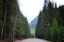 Trees line the road in Glacier National Park, Montana