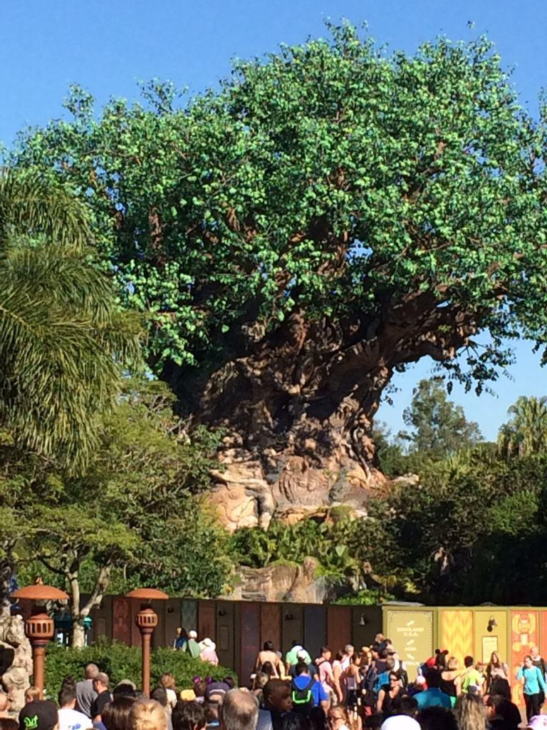 Animal Kingdom at Disney World