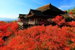秋季的京都,一起去賞楓吧!