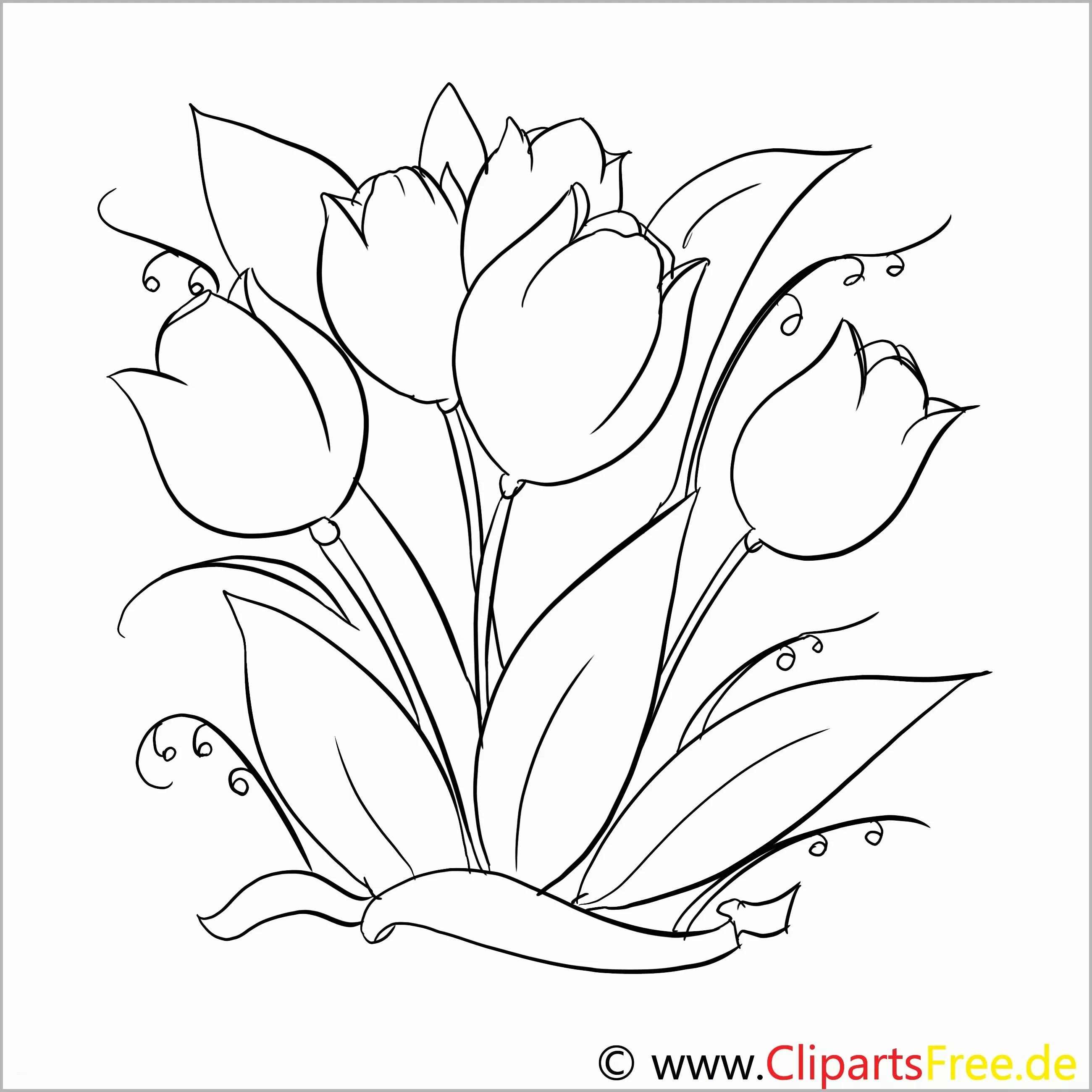 Erschwinglich Tulpen Malvorlage Gratis - Bibliothek