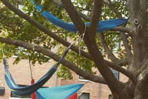 High Hopes Hammocks