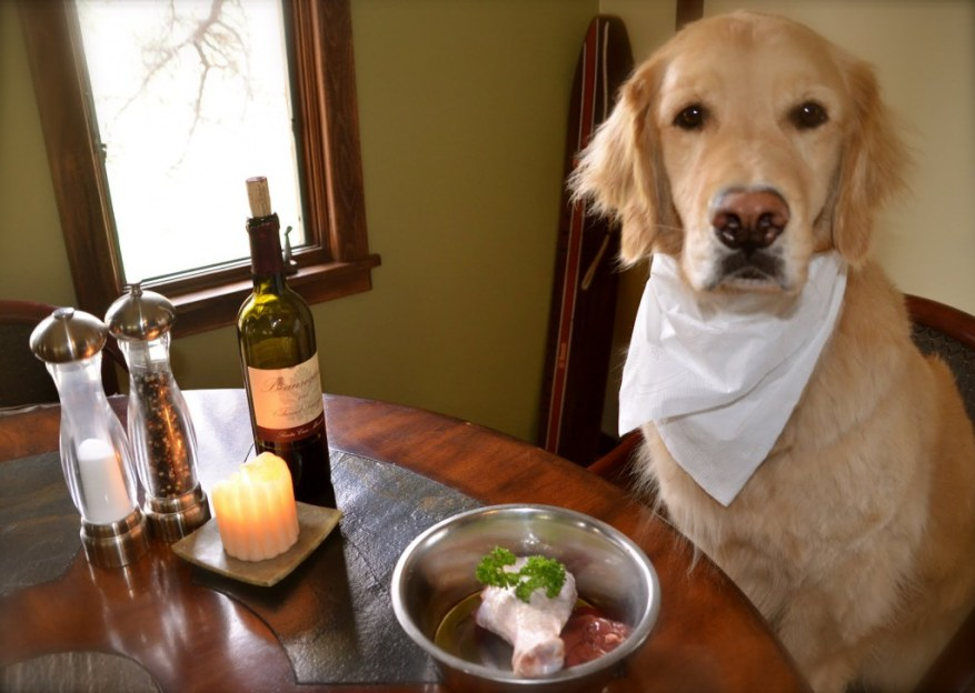 chicken and rice for dog with pancreatitis