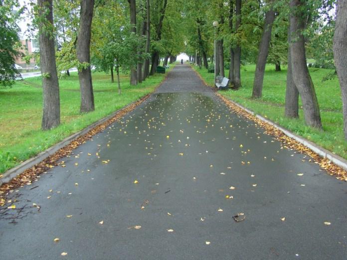 Левашовский бульвар. Фото: vk.com