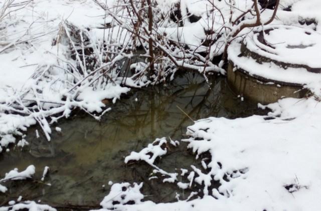 Причиной затопления стала засорившаяся канализация. Фото: Ольга Протасова