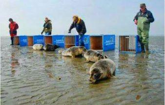 Release healty seal