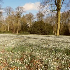Spring in the forest Amelisweerd