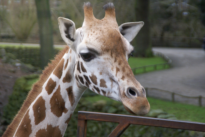 By bike through National Park in the Netherlands the eyecatching Military Museum and the Zoo Giraffe