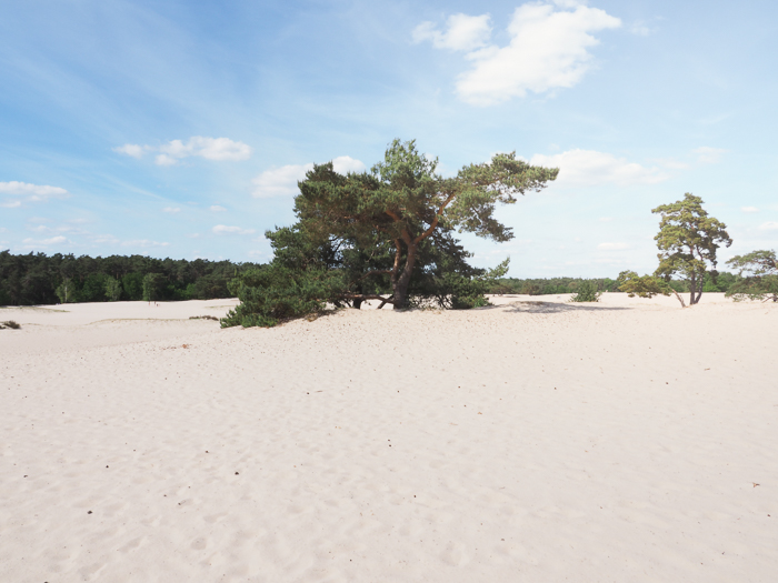 By bike through National Park in the Netherlands to the Military Museum and the Zoo. Sand dunes in Soest