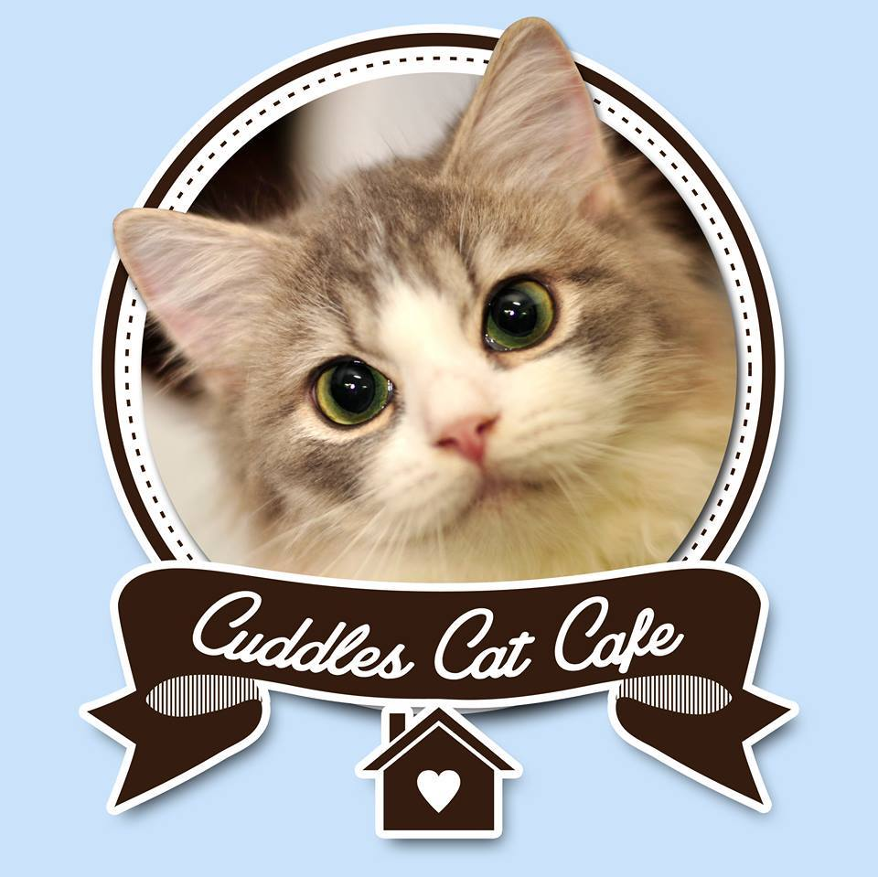 Ava Food For Cats