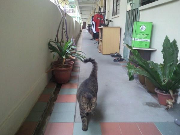 Cat HDB Corridor (2)