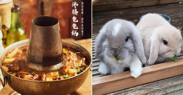 Clarke Quay Eatery Introduces S'pore's First Rabbit Hotpot, But Triggers Bunny Lovers