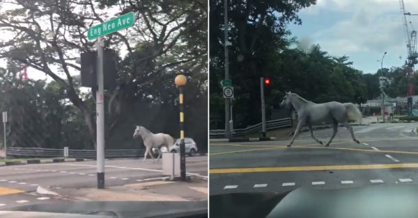 White Horse Chiongs Across Bukit Timah, Later Rescued & Returned Home Safely