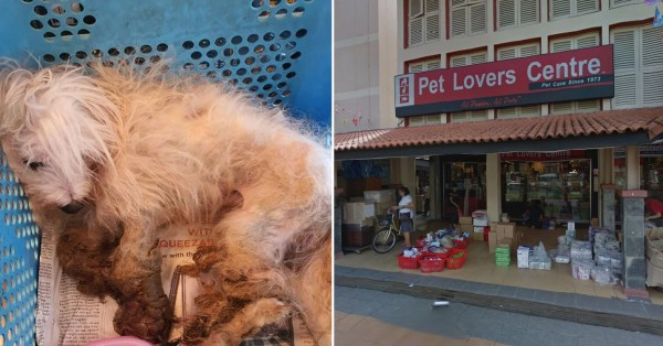 Maltese Dog Dies After Being Left Outside Toa Payoh Pet Shop, SPCA Offers $1,000 For Information
