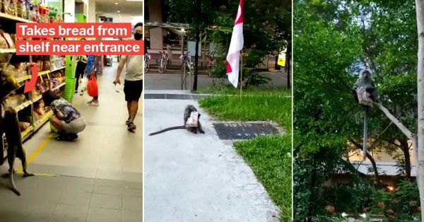 Monkey Sneakily Cops Bread From S'pore Shop, Lepaks In Tree For Teatime