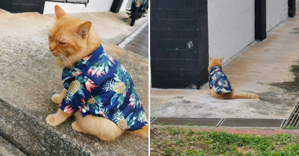 Cat In Adorable Hawaiian Shirt Spotted At Tampines, Animal Lovers Urge Owner To Keep It Indoors