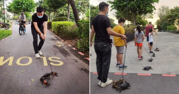 Seafood Restaurant Takes Crabs For Stroll In Punggol Park To Help Them Get Meaty