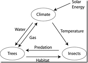 INSECTS, TREES, AND CLIMATE: THE BIOACOUSTIC ECOLOGY OF